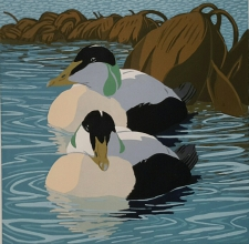 Eiders 300 mm x 300 mm edition of20