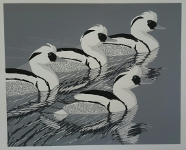 Smew Parade 360 mm x 290 mm edition of 14