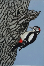 Great Spotted Woodpecker 190 mm x 300 mm edition of 15