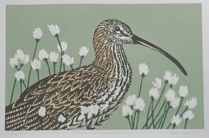 Curlew in cotton grass 285 mm x 185 mm edition of 14