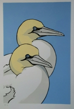 Gannets 200 mm x 300 mm edition of 14