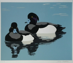 Tufted Drakes 250 mm x 200 mm edition of 16