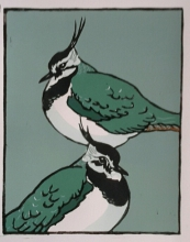 Green Plover 180mmx230mm edition of 15